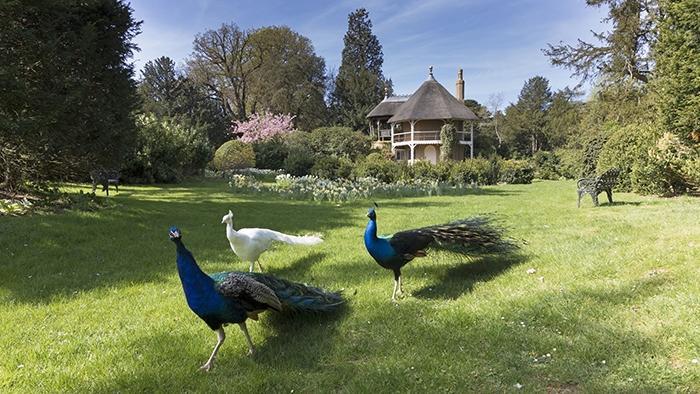 Shuttleworth-Swiss-Garden-and-peacocks700pxw